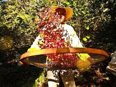 Café Brésil Fazenda Ambiental Fortaleza Mococa Bob O Link