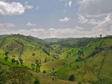 Café Terroir Ethiopie Moka Sidamo Chiré Grade 1