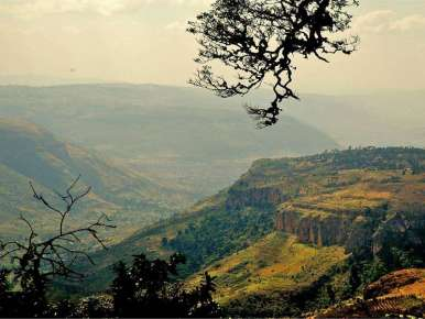 Café Ethiopie Moka Harar Longberry terroir Mesela