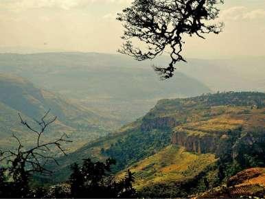 Ethiopian Coffee Moka Harar Longberry Terroir Mesela